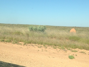 Trying and failing to get a picture of the termite mounds